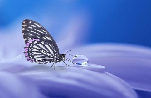 Una mariposa que muestra una gota de agua