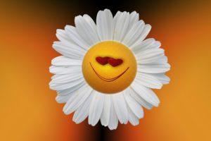 una flor sonriente o happy flower