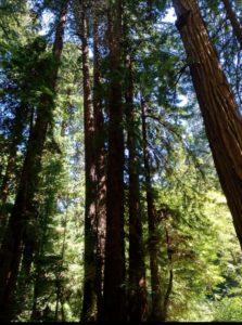 Arboles , bosque , distancia de recate, magnitud es un gusano