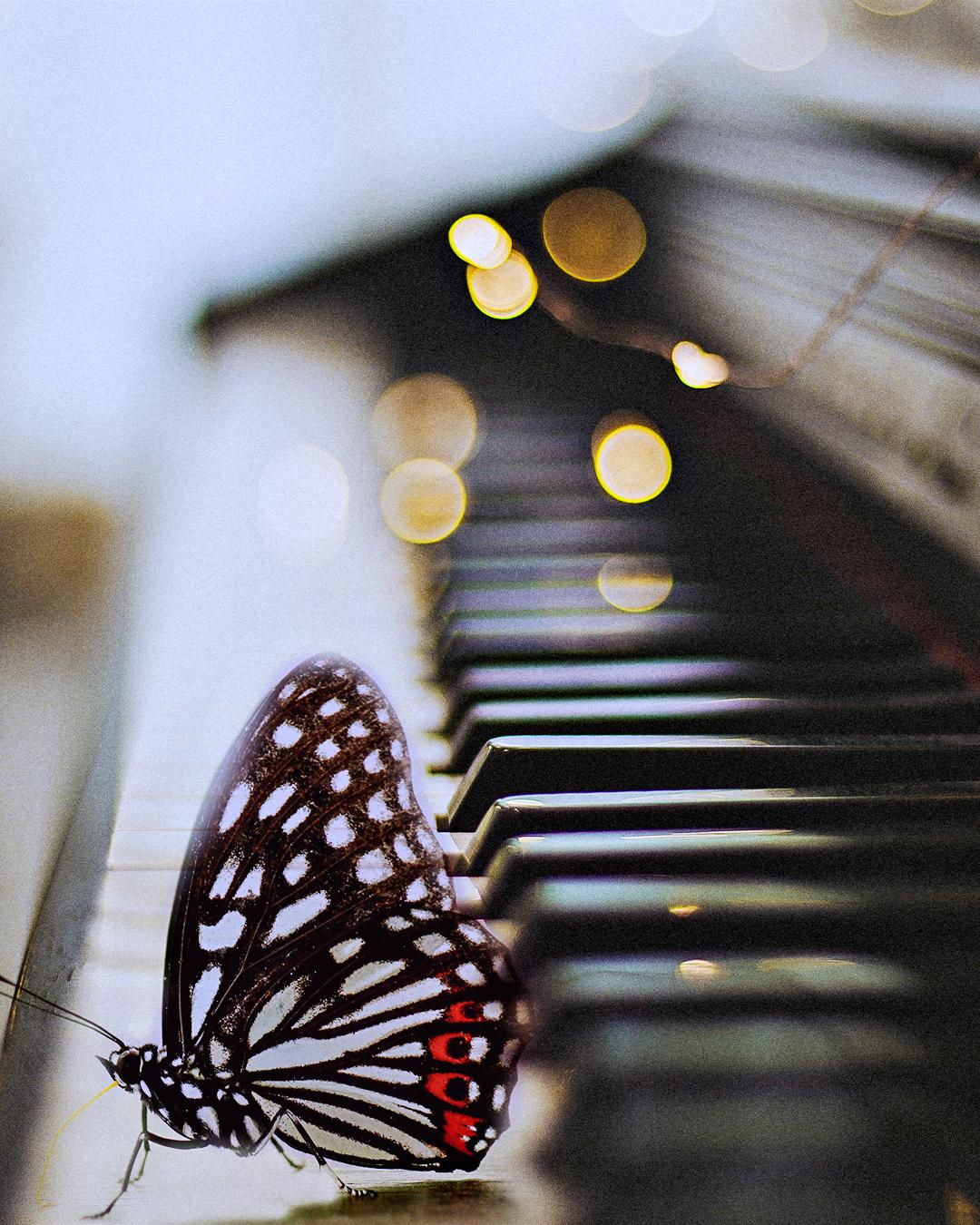 La creatividad que nos salva , una mariposa sobre un piano